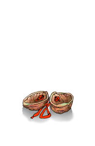 Wallnüsse rot 3